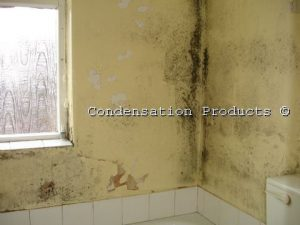 Condensation problem - black spot mould