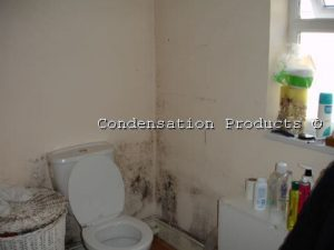 black spot mould caused by condensation
